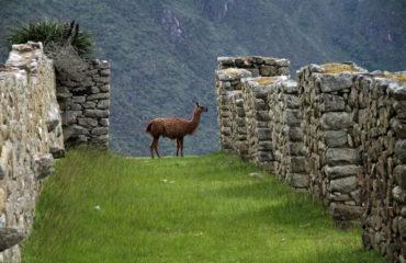 Peru-machu-picchu-1018768_1280